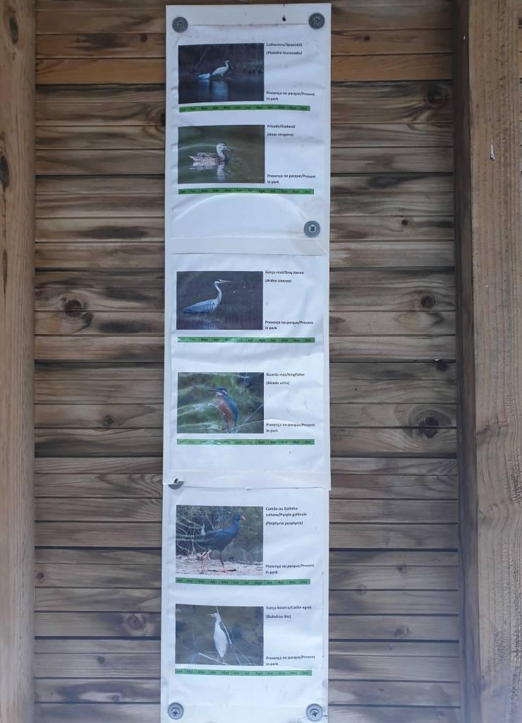 Vogelarten Quinta Marim