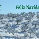 feliz_navidad_2014_olipe_aceite_olivalle_ecologico_olivar_sierra_los_pedroches