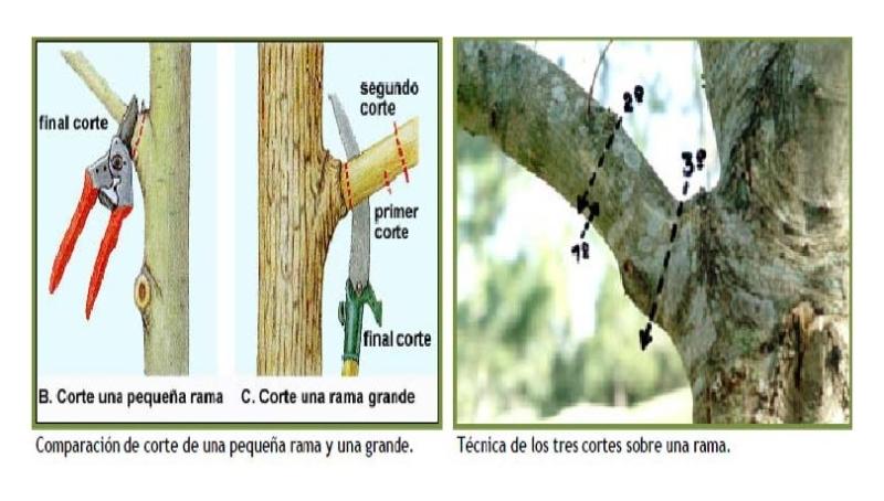 Curso de Poda Olivarera Los Pedroches Olivar de Sierra Aceite Ecologico Olipe Olivalle