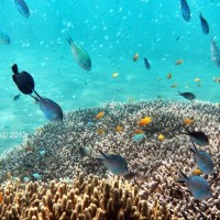 Amed Bali, Underwater.
