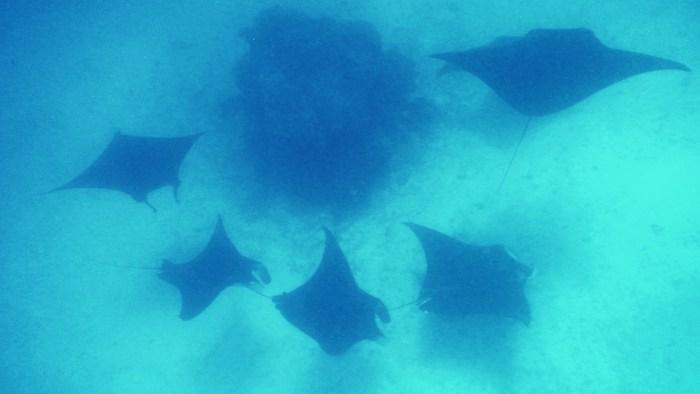 snorkeling di raja ampat
