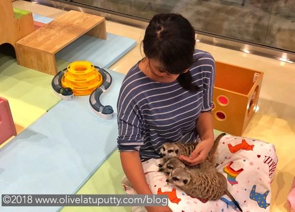 Cafe meerkat Seoul