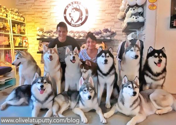 huskitory surga untuk pecinta anjing
