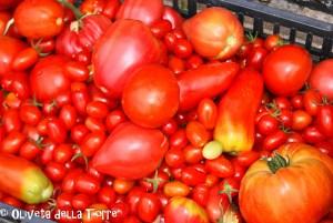 Tomaten, tomates, tomatoes