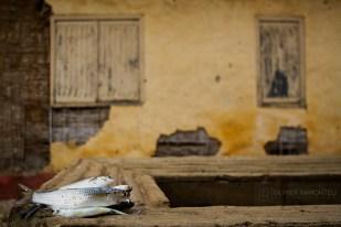 Carabane, Casamance, Sénégal, Afrique
