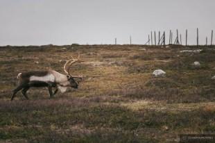 norvege suede voyage photographie roadtrip 2016 10 08406