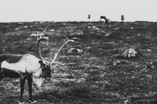 norvege suede voyage photographie roadtrip 2016 10 08410