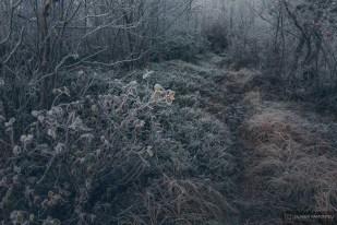 norvege suede voyage photographie roadtrip 2016 10 09501