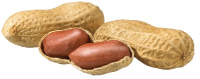 Image Result For Peanut Allergy Treatment