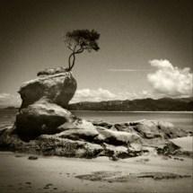 NZ tree