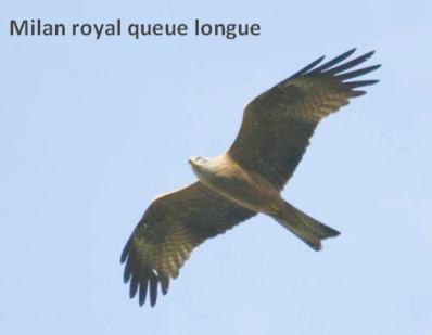 oiseaux de corse- olmuccio article