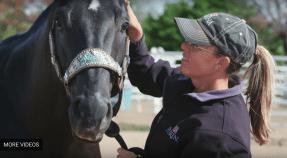 Equine Tack Supplies