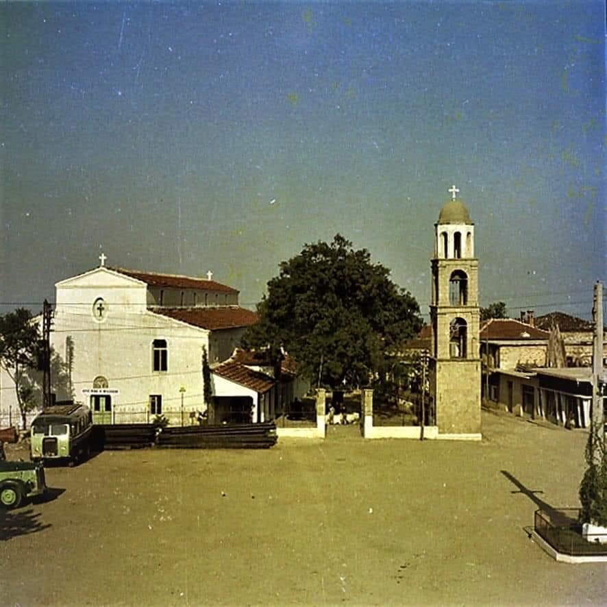 Λιτόχωρο | Το πουρνάρι του Αγίου Νικολάου