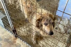 Αναστασιάδης | Η απάντηση της διοίκησης για τα σκελετωμένα ζώα ήταν: Τι έχεις Γιάννη; Κουκιά Σπέρνω
