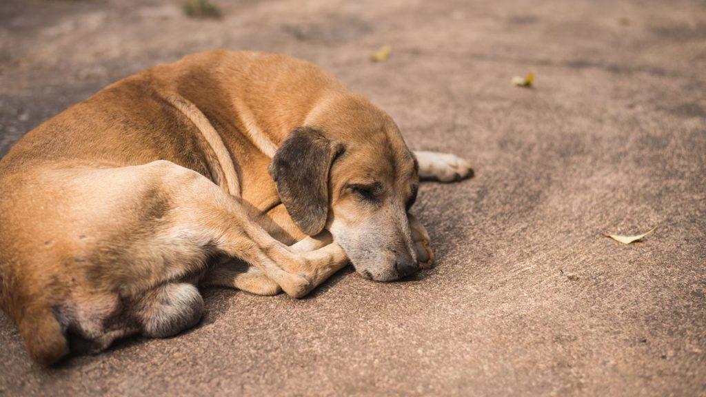 Δήμος Κατερίνης | Η πενταμελής επιτροπή παρακολούθησης του προγράμματος διαχείρισης αδέσποτων ζώων συντροφιάς