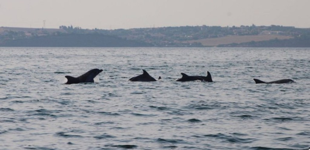 Πόσα είναι τα δελφίνια του Θερμαϊκού;