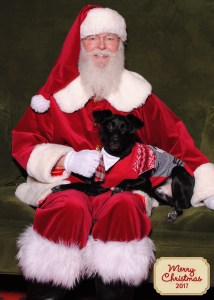Christmas is going to the dogs