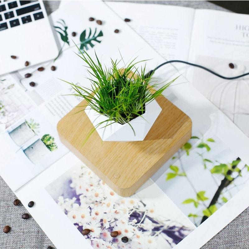 Pot de fleur en lévitation bois clair décoration d'intérieur bureau avec plante