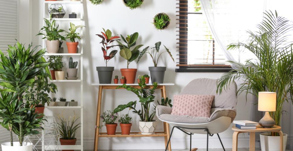 plantes verticales conseils décoration