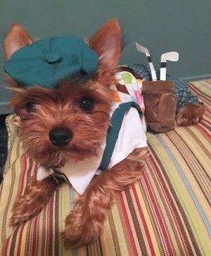 Dog Golfer Costume