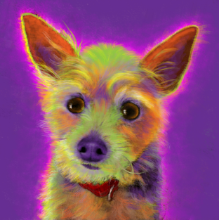 Terrior Chihuahua