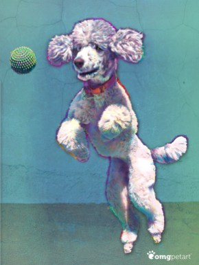 Agility - Poodle Jumping