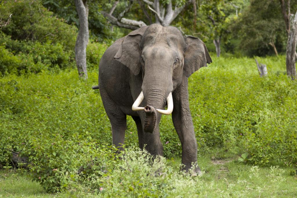 international-elephant-day