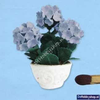 hortensia-blauw-24