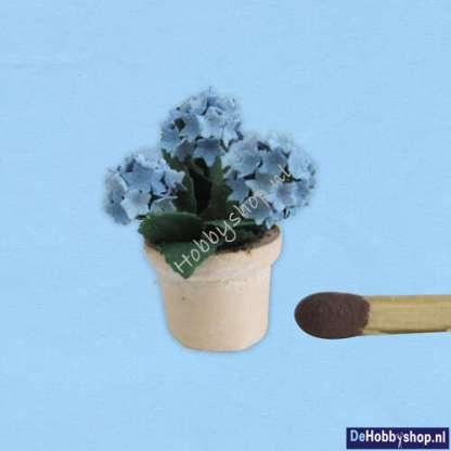 hortensia-blauw-48