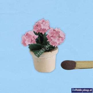 hortensia-roze-48