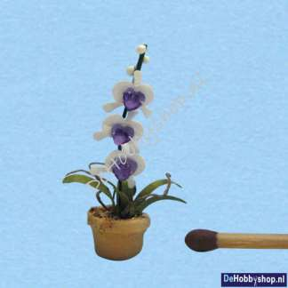 orchidee-wit-lila-1op48