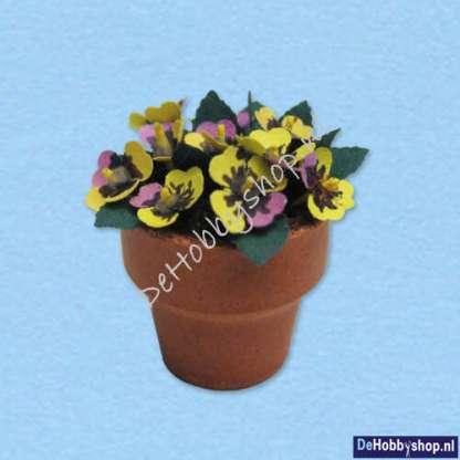 viooltjes-geel