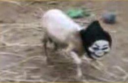 Scary Sheep