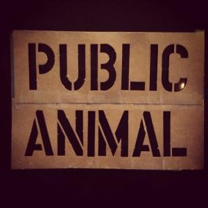 public animal 7