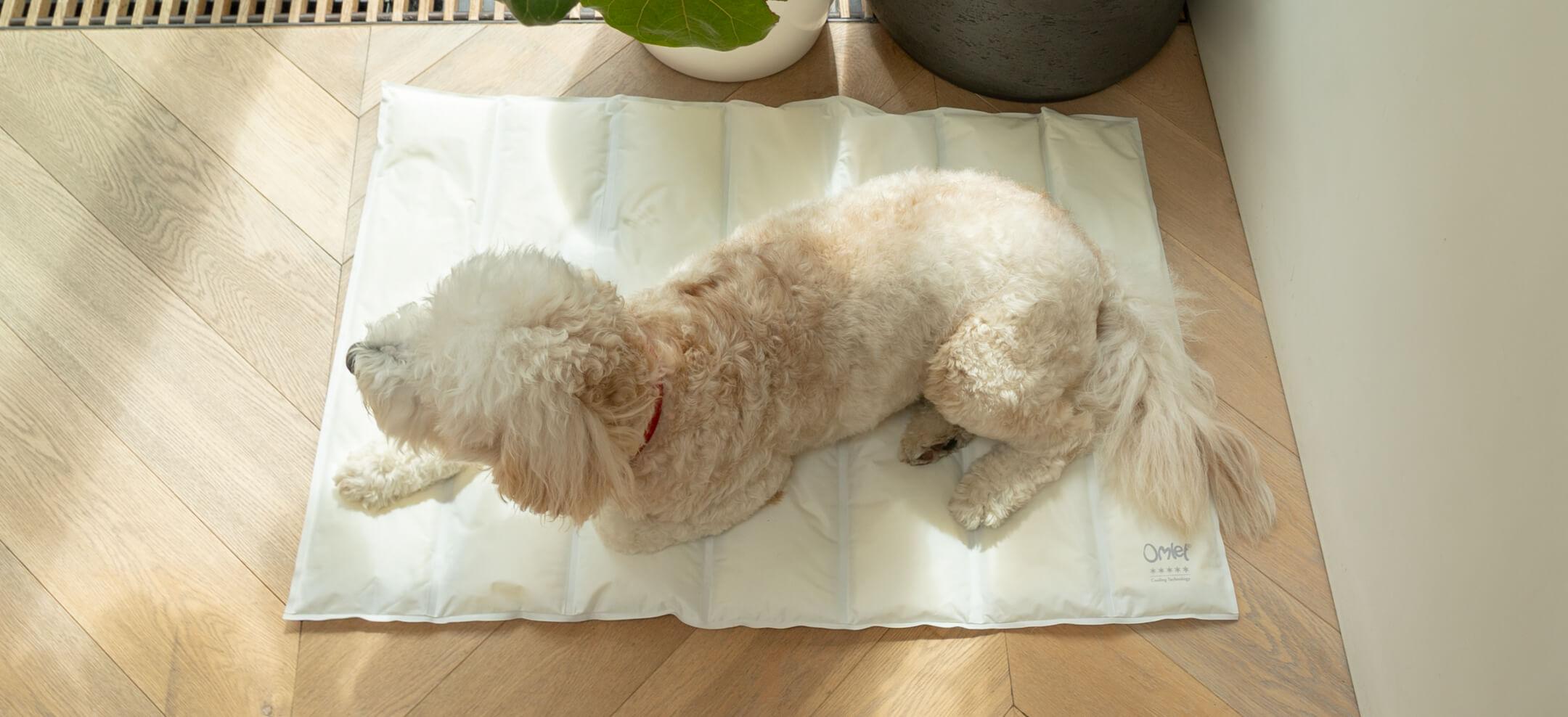 petit tapis rafraichissant omlet pour chien gris et creme