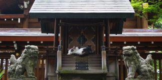 Japon - Nagoya - Temple et chat