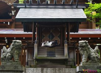 Japon - Nagoya - Temple et chat