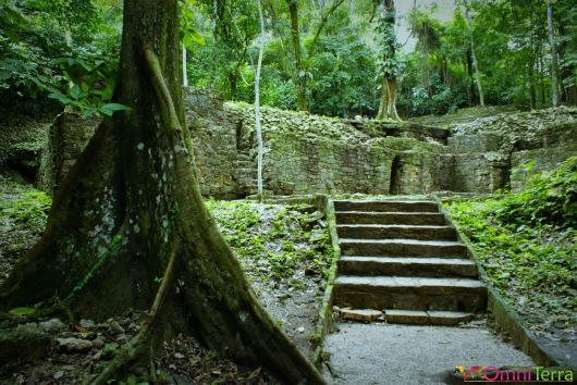 Mexique - Palenque - Jungle et ruines