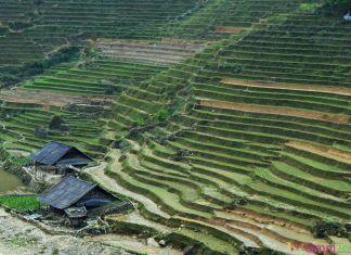Vietnam - Sapa - Rizières
