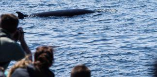 Québec - Observation des baleines - Bateau