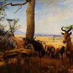 New-York-Musée-d'histoire-naturelle