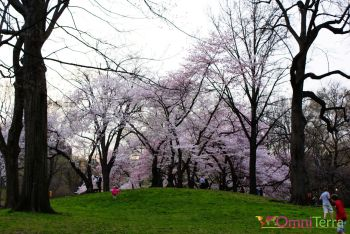 New-York-Central-Park-Printemps