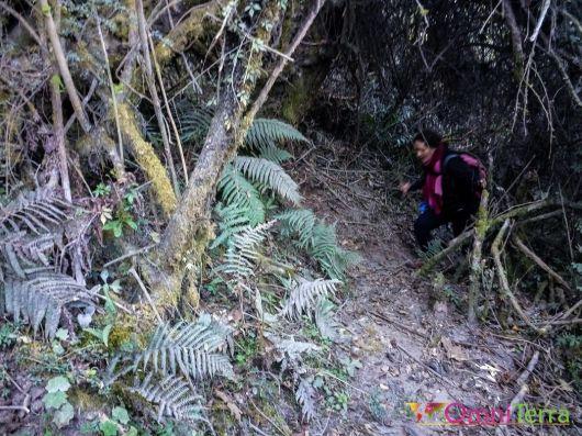 guatemala - Santa Maria - foret