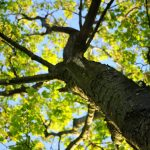 The tree of love- spiritual sexuality