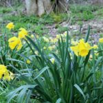 Meditation for Springtime