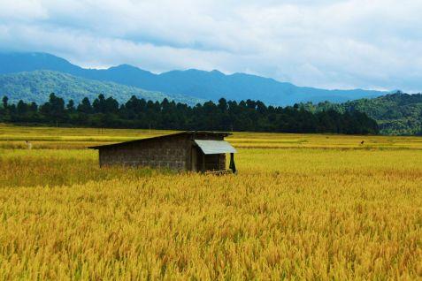 Image result for Ziro, Arunachal Pradesh