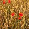 Fields in Eastern Poland