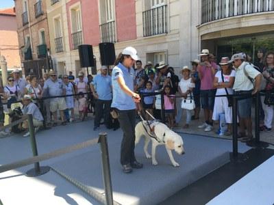 Exhibición Perros Guía de la ONCE
