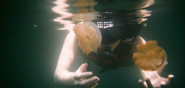 Jellyfish at Jellyfish Lake
