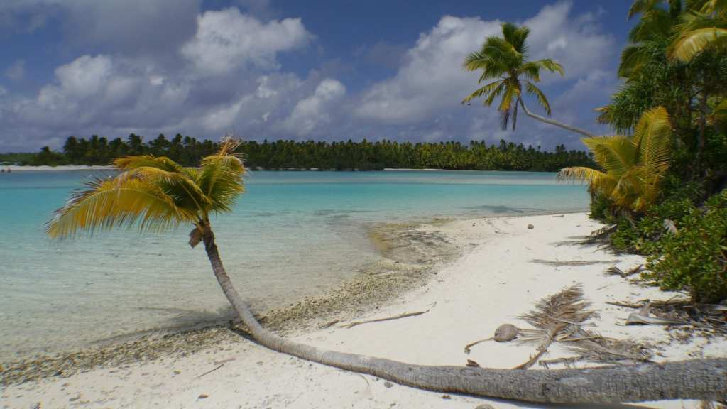 Palm tree at One Foot Island
